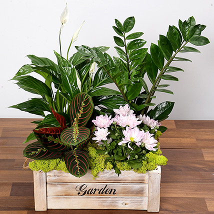 Beautiful Green Garden Box: Dish Gardens