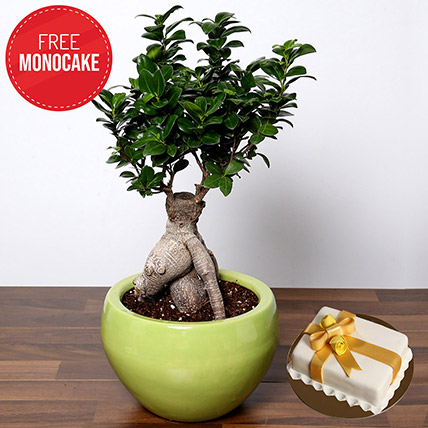Bonsai Plant and Free Mono Cake: Bonsai Plants