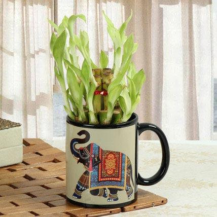 Lucky Bamboo In Printed Mug: Anniversary Mugs