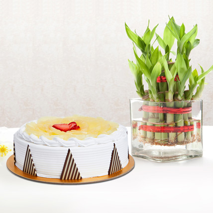 Pineapple Cake and Lucky Bamboo Combo: Doctors Day Gifts