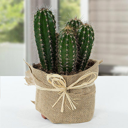 Cactus Jute Wrapped Potted Plant: Outdoor Plants