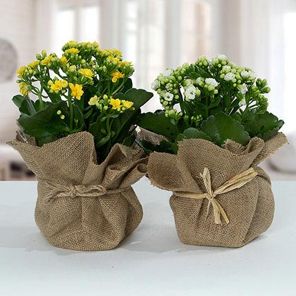 Jute Wrapped Dual Potted Plants: Outdoor Plants