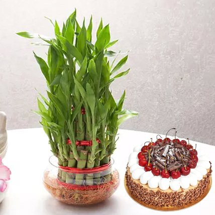3 Layer Bamboo With Black Forest Cake: Plant Combos