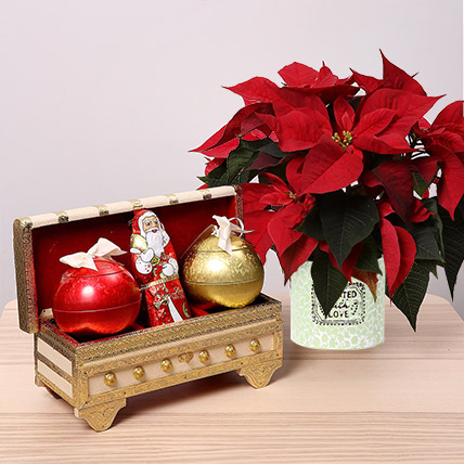 Lindt Milk Chocolates and Poinsettia Plant Combo: Poinsettia Plants