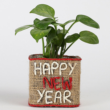 Money Plant In New Year Glass Vase: Money Plants