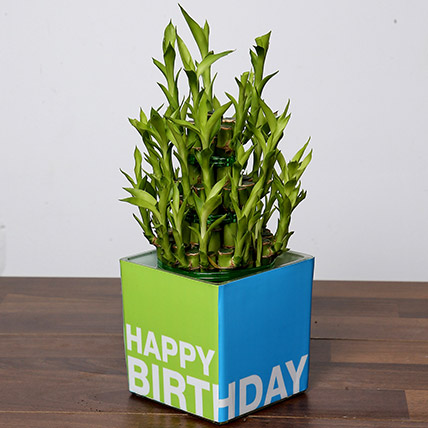 3 Layer Bamboo Plant For Birthday: Same Day Plants Delivery