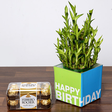 3 Layer Bamboo Plant and Chocolates For Birthday: Gifts Combos