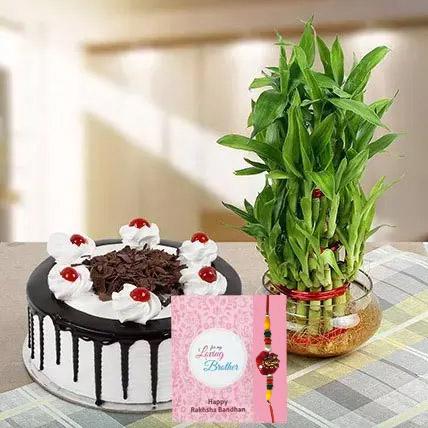 Rakhi with Cake and Plant: Rakhi With Cakes