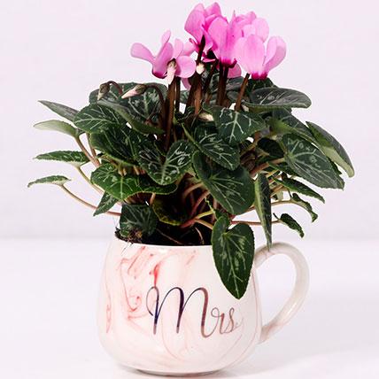 Cyclamen Plant In Ceramic Pot: Plants for Anniversary