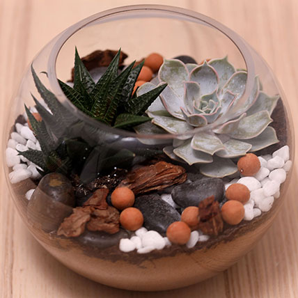 Decorative Succulents In Fish Bowl: Air Purifying Plants