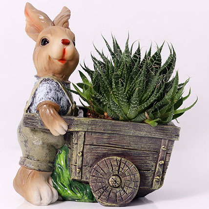 Elegant Aloe Aristata in Rabbit Cart Pot: Desk Plants