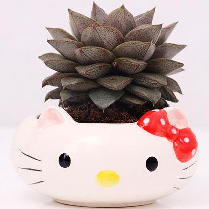 Hello Kitty Pot of Echeveria Plant: Office Plants