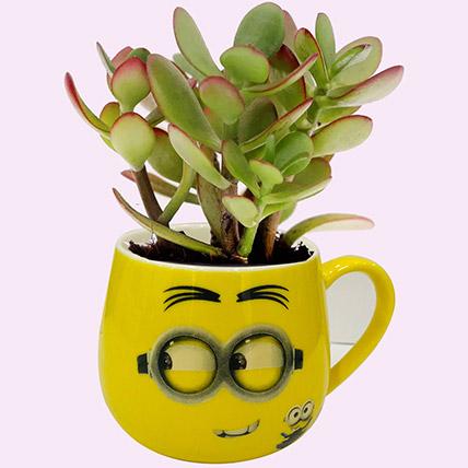 Smiley Pot of Crassula Plant: Indoor Plants