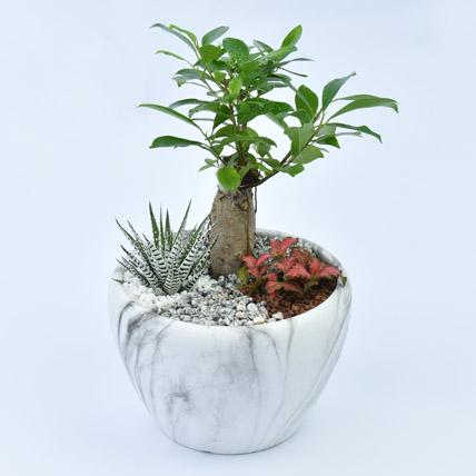 Bonsai Garden:  Business Gifts