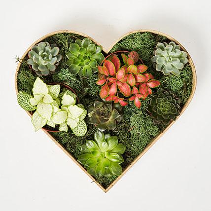2 Fittonia & 6 Echeveria Plants In Heart Shape Wooden Base: Succulent Plants