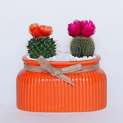 Cactus in Orange Planter: Shrubs