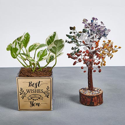 Best Wishes with Joy Plant and Wish Tree: