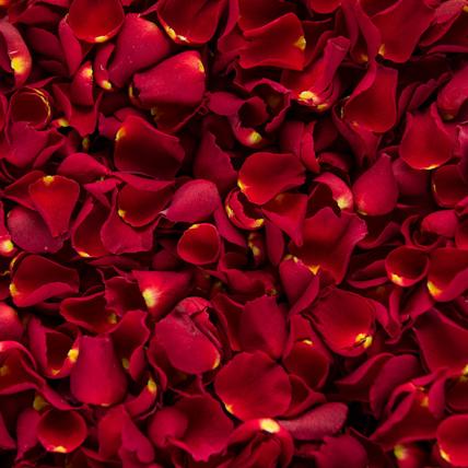 Rose Petals: