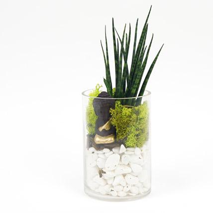 Prosperity to You: Desktop Plants