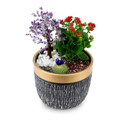 Wish Tree garden: Housewarming Gift Ideas
