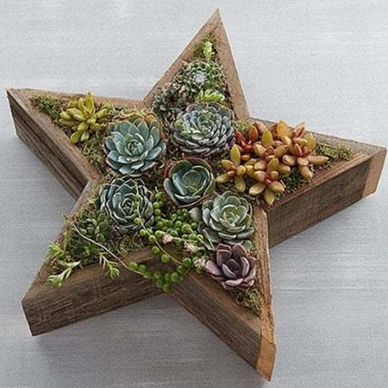 Wood Star Succulent: