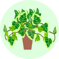 Money Plants Online