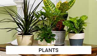 Plants Gifts Online