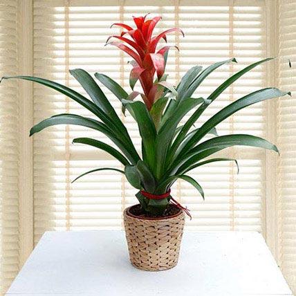 Plants online dubai