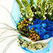 20 Splendid Blue Roses Bouquet SG