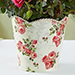 Budding Rose Plant