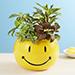 Smiley Dish Garden