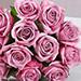 Vintage Purple Roses