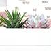 Xoxo Succulents